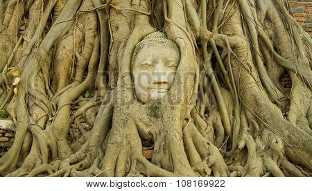 Buddha head in tree from the front