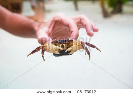 Male hand holding large live crab at white beach