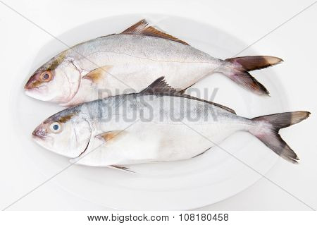 Couple Of Amberjack Fresh Fishes On White