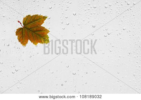 Colorful autumn maple leaf and raindrops on the window.