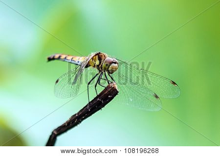 Dragonfly on the stem.