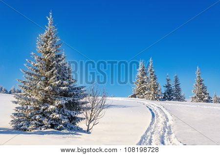 Fairytale winter landscape with snow-covered trees