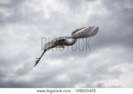 Big White Bird On The Shore Of The Amazon, Brazil