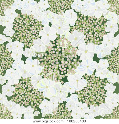 Flowers Viburnum Seamles Background With Leafs In Realistic Hand-drawn Style