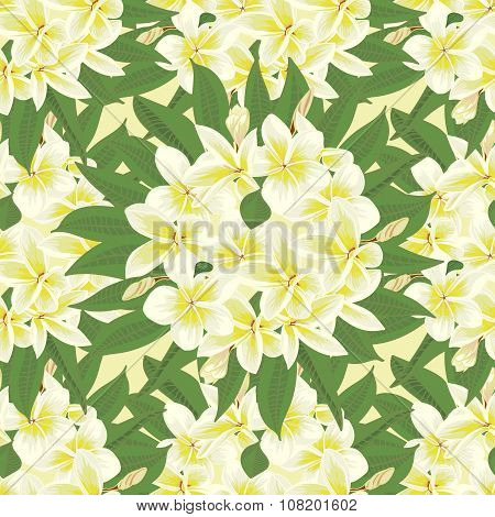 Flowers Frangipani Seamles Background With Leafs In Realistic Hand-drawn Style
