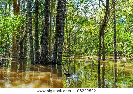 Flooded Trees In The Amazon Rainforest, Brazil