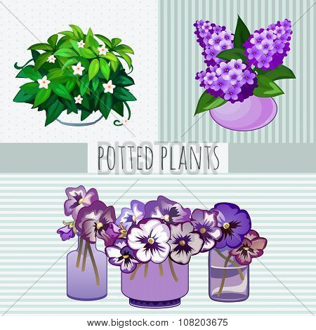Purple flowers in pots, potted plants