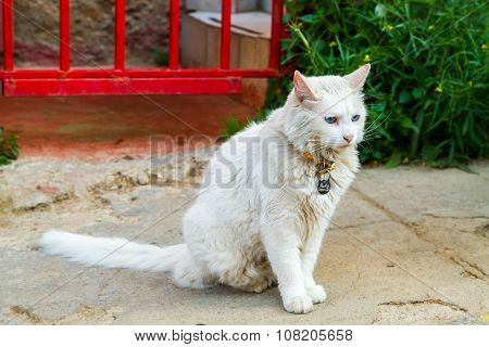 Portrait of street cat