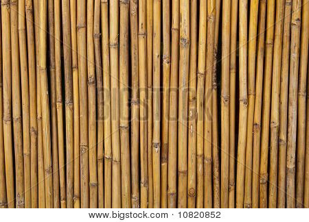 Fencing Bamboo Panel