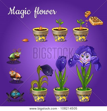 Stages of growing magic blue flower
