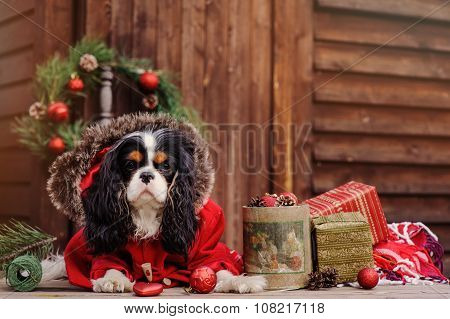 cute dog celebrating christmas at cozy wooden country house with gifts