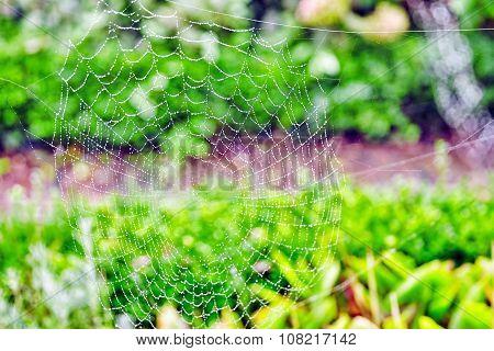 Spider Web (cobweb) Closeup View On Nature.