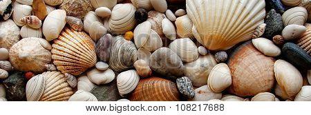 Sea Shells Seashells... Panorama - Assorted Shells / Pebbles - Background Texture.