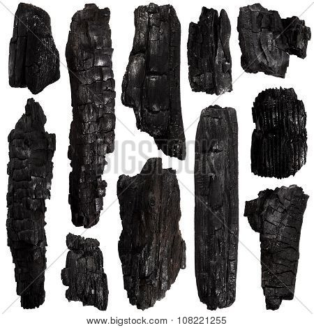 Set Of Burnt Bark Tree