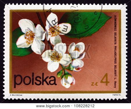 Postage Stamp Poland 1972 Mock Orange, Flowering Plant