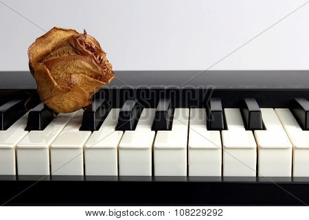 Dried Rose With Water Drops Lies On The Piano