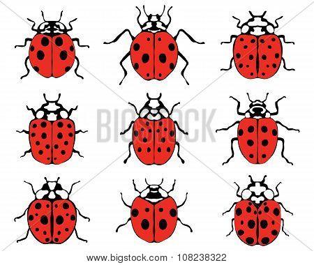 cheerful ladybugs