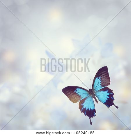 Blue Tropical Butterfly for Background
