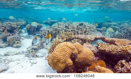 Shallow Water Coral Reef