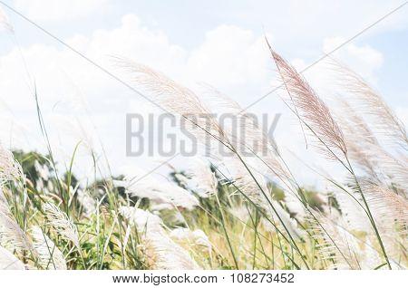 Blurred Grayish Grass Flower On Blue Sky