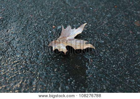 Maple leaf on wet ground