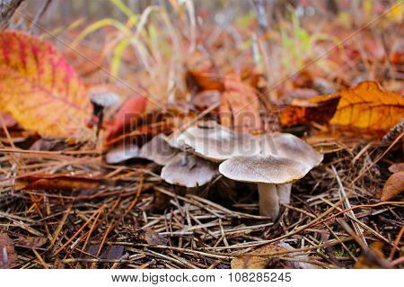 Edible mushrooms in the woods