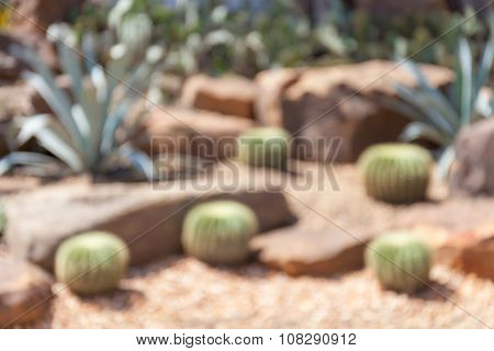 Blurred Photo Of Cactus In Botanical Garden, Model Of Desert Garden.