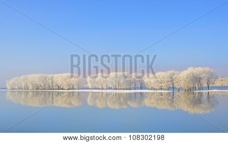 Reflexion Of Winter Trees