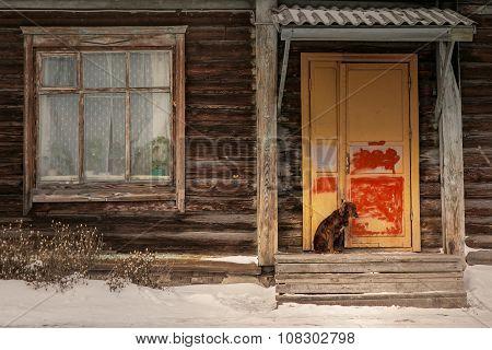 Sad Dog Sitting In Front Of Door