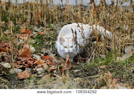 Stray cat is hunting in the Autumn leaves