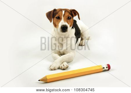 Lying Dog With Big Yellow Pencil