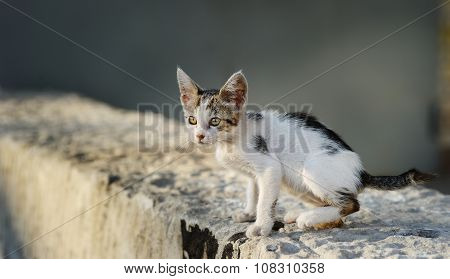cute stray kitten
