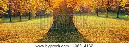Tree in of autumn park in good light
