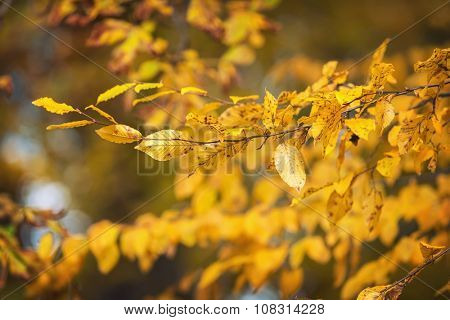Blurred nature background with beautiful sunny autumn foliage in park