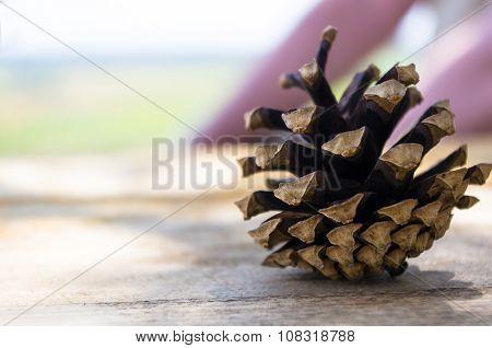 Open Pine Cone