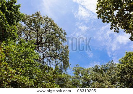 Green Tree Against Sunlight In  Forest