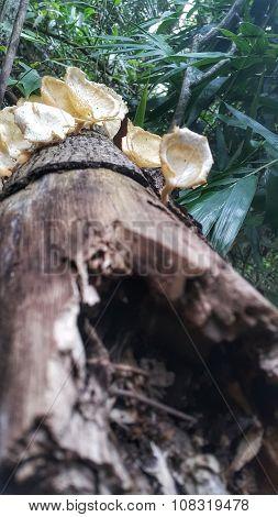 Mushrooms on a Wood