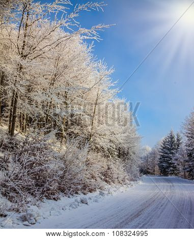 Ski track runs along the road in the snowy forest.  Bright and sunny morning, New Year's