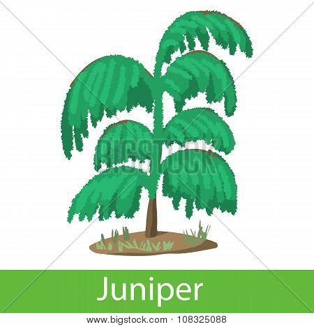 Juniper cartoon icon