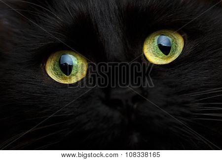 Cute Muzzle Of A Black Cat Close Up