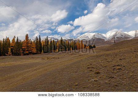Mountains Autumn Forest Snow