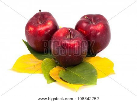 Three apples on leaves isolated