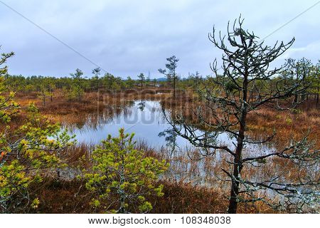 Cloudy autumn day in the bog