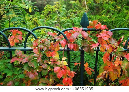 Detail of garden fence with colorful vegetation in Autumn season