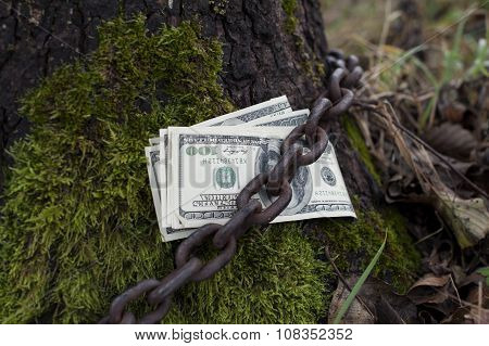 Money Tethered To Tree