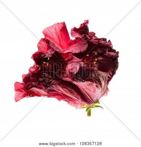Back Lit Flower
