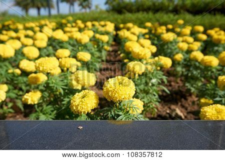 Marble Bench With Marigold Background