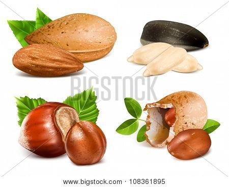 Collection of nuts. Vector illustration