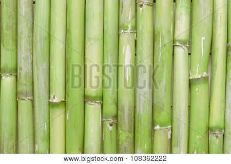 Inspirational, natural green bamboo background creating a zen scene