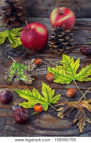 still-life autumn leaves